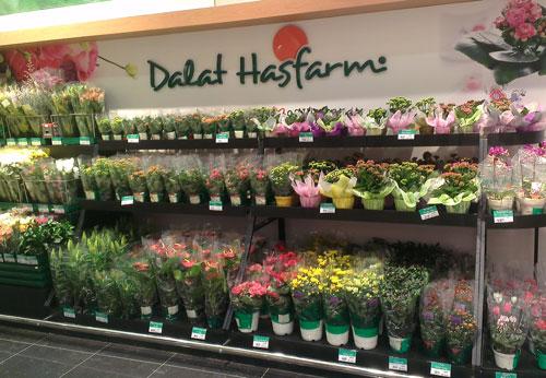 dalat-hasfarm-3